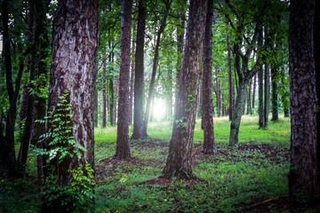 Tree Light Glare