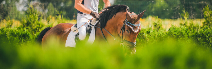 Horse horizontal banner for website header design. Dressage horse and rider in uniform during equestrian competition. Blur green trees as background.  Fototapete