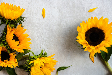 Yellow Sunflower Bouquet on Grey Background, Autumn Concept