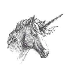 Vector vintage illustration of unicorn in engraving style. Hand drawn portrait of magic animal isolated on white. Fantasy character sketch