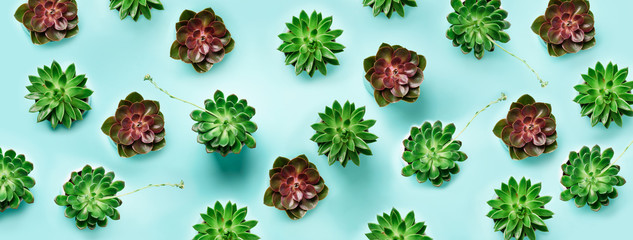 Pattern of green exotic succulents on blue background. Flat lay. Top view. Pop art design, creative...