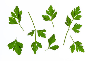 flat-leaved parsley leaves on white background