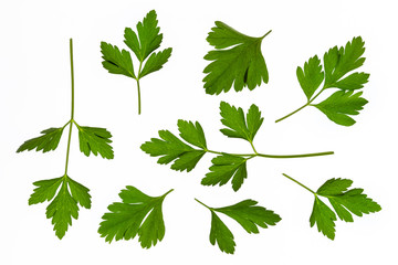 fresh garden parsley leaves isolated on white background