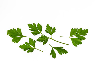 flat-leaved parsley leaves isolated on white background with copy space