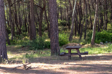 Wide shot of wooden picnic tables in forest with green beautiful background