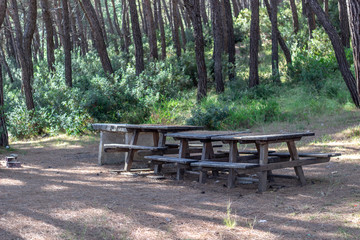 Wide shot of wooden picnic tables in forest with green background