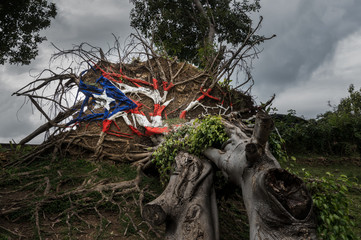 Fallen tree from Hurricane Maria in San Juan