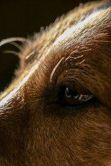 Close up of a dog's eye
