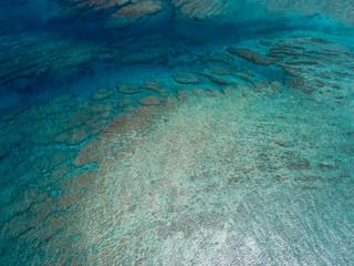 oral reef5