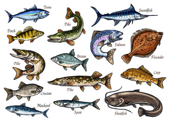 Fresh fish and seafood isolated sketches