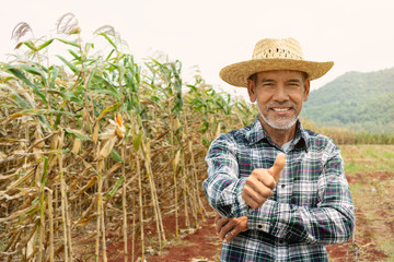 Portrait happy mature older man is smiling. Old senior farmer with white beard thumb up feeling confident. Elderly asian man standing in a shirt and looking at camera at corn field in sunny day.