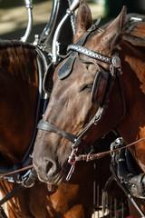Horses 20