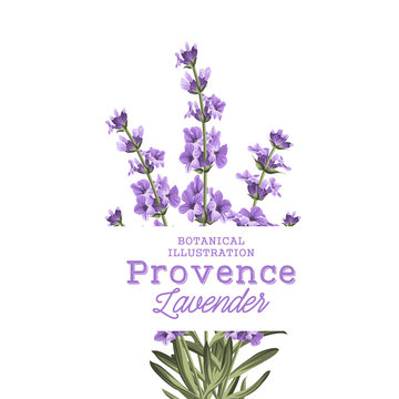 The lavender elegant card. Botanical illustration of provence lavender. Bouquet of violet flowers and text sign in vintage style. Card with custom sign and place for your text. Vector illustration.