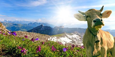Glückliche Kuh in der Schweiz :)
