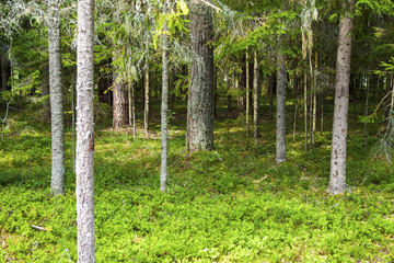 Edge of the adjacent summer forest.