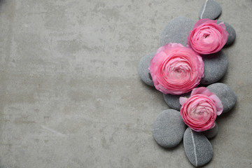 Tuinposter Spa Pink three ranunculus with gray stones on gray background