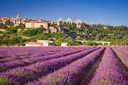 Sault village lavender field in Provence, France