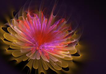 Beautiful abstract fractal flower, colored flower