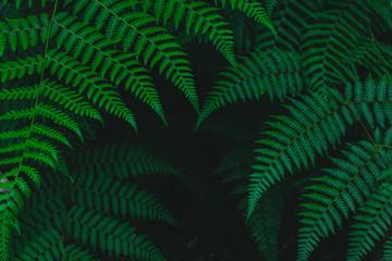 Dark botanical background tropical fern faded