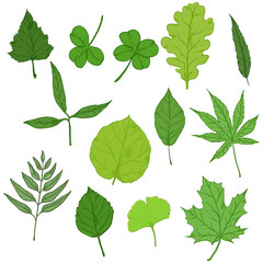 Vector Set of Cartoon Green Tree Leaves.