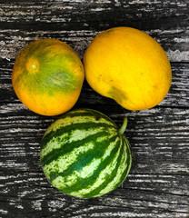 Fresh vegetables from the organic farm