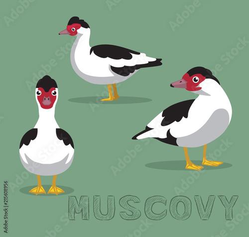 Duck Muscovy Cartoon Vector Illustration
