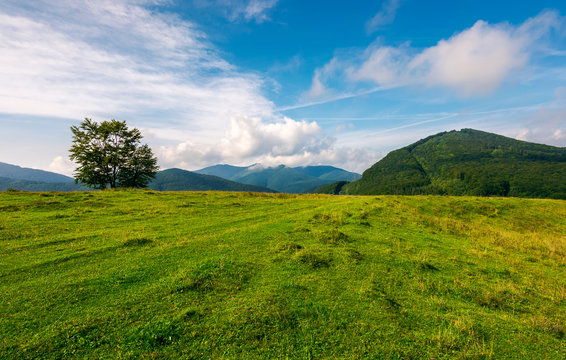 grassy meadow in mountains. tree on the edge of a hill. wonderful weather condition in early autumn. beautiful countryside background