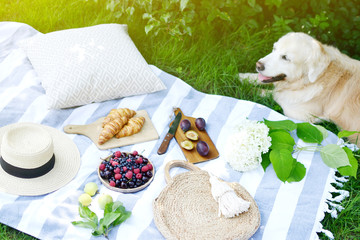 Picnic with Dog Golden Retriever Labrador Family Instagram Style Food Fruit Bakery Berries Green Grass Summer Time Rest Background Sunlight