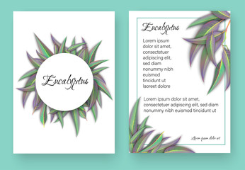 White backgrounds with beautiful eucalyptus leaves.