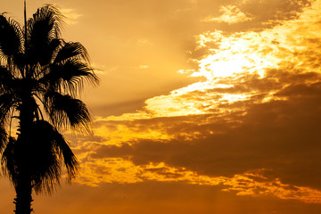 Palm tree silhouette on sunset tropical sky with orange clouds