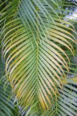 Foto op Canvas Tropische Bladeren palm tree leaf