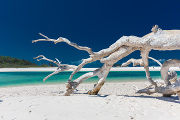 White driftwood tree on amazing Whitehaven Beach with white sand in the Whitsunday Islands, Australia