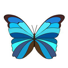 isolated, butterfly, blue
