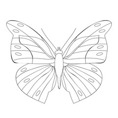 butterfly book coloring, sketch