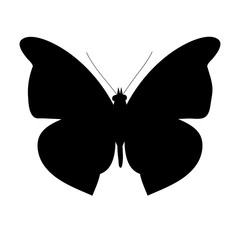 isolated, butterfly silhouette