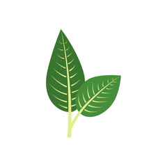Tropical leaves floral icon. Autumn wood and exotic leaf decoration for botanical background.