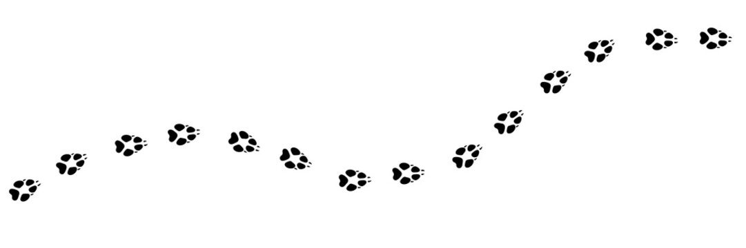 Paw vector foot trail print of wolf. Wolfling silhouette animal diagonal tracks for t-shirts, backgrounds, patterns, websites, showcases design, greeting cards, child prints, etc. It's scatter brush.