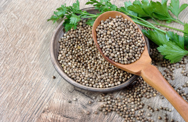 coriander seeds in a wooden spoon. top view. copy spaces.