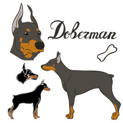 Doberman dog breed vector illustration set isolated. Doggy image in minimal style, flat icon. Simple emblem for pet shop, zoo ads, label design animal food package element. Realistic dog sign