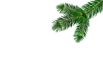 Green realistic branch of fir or pine close-up. Isolated on white background. illustration