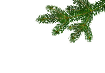 Green realistic branch of fir or pine close-up. branched out. Isolated on white background. illustration