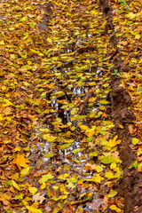 Photo of orange autumn forest with leaves and water