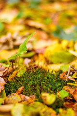 Photo of green moss in orange autumn forest