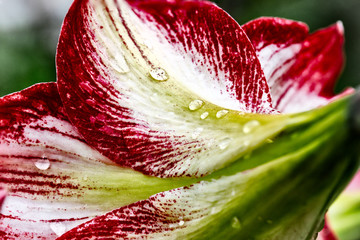 Dew drops on the flower 10