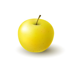 Isolated realistic colored yellow apple. Whole juicy fruit with shadow on white background.