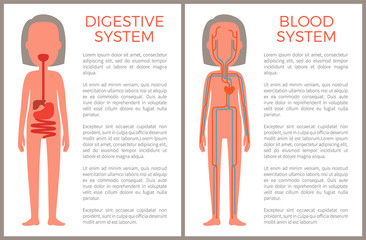 Digestive and Blood System Color Anatomical Image