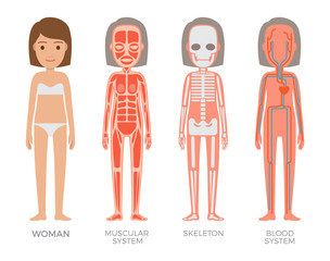 Woman Muscular Skeleton and Blood Systems Struct