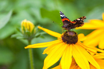 Summer butterfly and yellow flower on blurred background