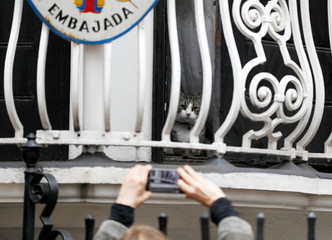 A man photographs Julian Assange's cat on the balcony of Ecuador's embassy in London