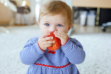 Little adorable baby girl eating big red apple. Vitamin and healthy food for small children. Portrait of beautiful child of 6 months